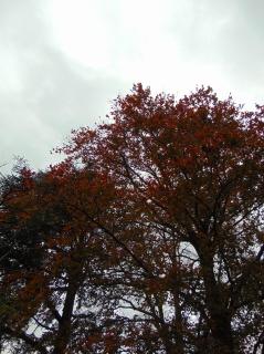 simpletree (1)