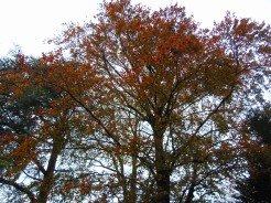simpletree (2)