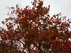 simpletree (3)