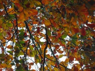 simpletree (4)
