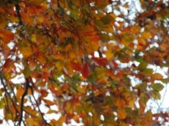 simpletree (5)