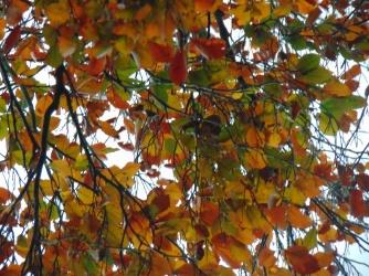 simpletree (6)
