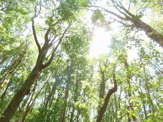 treetrees (1)