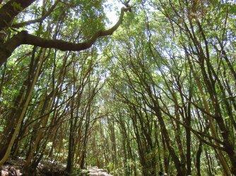 treetrees (2)